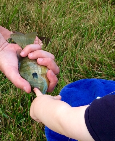 family bluegill 1